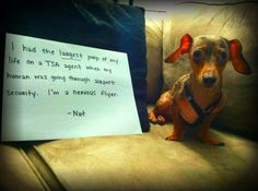 dogshaming:    Nervous Flyer    Nut actually had the poop scared out of him (all over a TSA agent) when he went through airport…    View Post    poor little weenie!