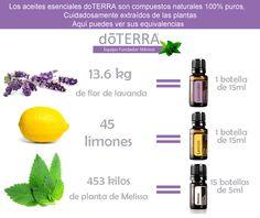 Equivalencias de aceites esenciales #doterra