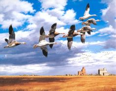 Migrating Flight - Snow Geese by David A Maass
