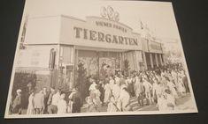 Wiener Prater, Babys, Austria, Hairless Dog, Petting Zoo, Animal Welfare, Animales, Babies, Baby