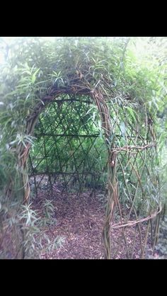 you can buy the willow cuttings from done deal make the area the size that you want looseing the ground then put in soil or anything that will keep the ground moist or maintan dampness then cover it with black plastic its up to you which design you might want to do tunnel or wigwam place the cuttings they should be around 10 inches when you get them , then bore a hole in the plastic and put the cutting in it. Started with 50 cuttings and over 2 years added on. it can take awhile to get…