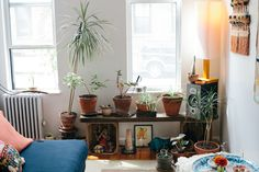 """Considine lives with her boyfriend in a sunny first-floor Greenpoint apartment. """"I actually kill plants all the time, but I tend to find them a lot too. I found this middle one in the street, in the middle of winter. I'm also like a spider plant whisperer. I have a ton of spider plants in my studio."""""""