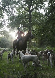 Horse and hounds await command from the huntsman as the the first rays of sunlight burn off the mist on an early fall morning.