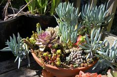 Sweet succulent container | Flickr - Photo Sharing!