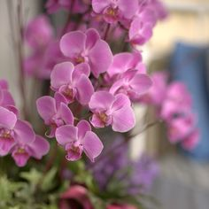 Can you resist orchids? Inviting and vibrant. #sharethebounty #mossmountain #joy #americangrown #flowers #comeseeus #garden
