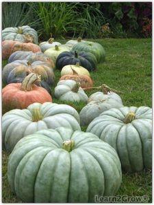 Autumn Splendor....Heirloom pumpkins