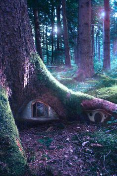 Can you imagine a little kid coming across this? KLF Tree House, The Enchanted Wood photo via ilaurens Enchanted Wood, Enchanted Garden, The Enchanted Forest, Fairy Garden Houses, Fairy Gardens, Fairy Tree Houses, Tree Garden, Fruit Garden, Fairy Doors