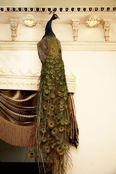 because everyone needs a peacock on their mantle