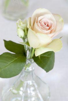 En enkelt rose er alltid vakkert.