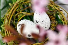 spring flowers, fruhlingsblumen, fleur de printemp, flori de primavara,