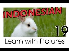 Learn Indonesian Vocabulary with Pictures - Farm Animals - YouTube
