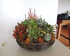 succulent arrangement-basket