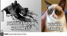 Grumpy Cat Tard Gets Challanged   Clean Humour Jokes, Witty ...