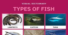 Types of Fish Reptiles And Amphibians, Mammals, Spotted Eagle Ray, Common Carp, Fish List, Visual Dictionary, Different Fish, Types Of Fish, Rainbow Trout
