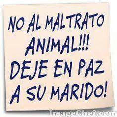 No al maltrato animal!