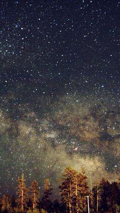 Galaxy Forrest