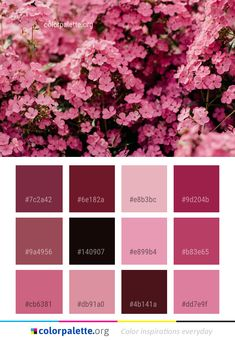 Fabulous Fall Color Palette Collection Ideas For Amazing Home Interior Bedroom Colour Palette, Fall Color Palette, Colour Pallette, Modern Color Schemes, Colour Schemes, Color Combos, Scheme Color, Color Symbolism, Pink Plant