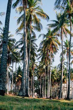 Парень идёт среди пальм на острове Gili Air. Follow me on Instagram @chebesovfilms Gili Air, Palm Trees, Around The Worlds, Plants, Instagram, Palm Plants, Plant, Planting, Planets