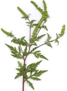 Herbs, Plants, Health, Flowers, Planting, Health Care, Herb, Plant, Planets