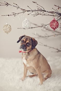 Christmas Doggie