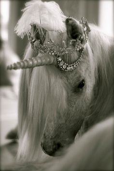 Tiaras on horses  Just in case I have a daughter  In case my daughter loves unicorns