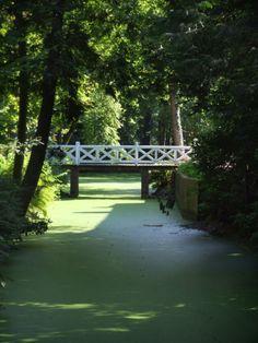 Rund um das Gut Stikelkamp in der Gemeinde Hesel befindet sich ein wunderschöner Wald, der zu Spaziergängen einlädt.