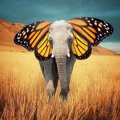 """Don't be afraid to be different. That's what makes you beautiful."" ~The Butterphant Instagram photo by nois7 ..*"