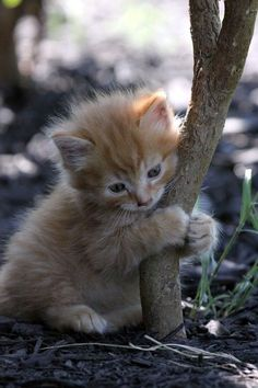 de cutest wittle treehugger