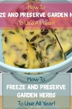 Need to know how to dry herbs or freeze and preserve them? Here's a delicious way to freeze and preserve your garden herbs so you can use them all year! Vegetable Garden For Beginners, Gardening For Beginners, Gardening Tips, Succulent Gardening, Vegetable Gardening, Fruits And Veggies, Vegetables, How To Get Abs, Money Saving Meals