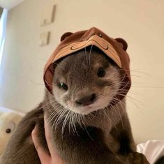 Baby Animals Pictures, Cute Animal Pictures, Funny Animal Photos, Cute Little Animals, Cute Funny Animals, Otters Funny, Funny Ferrets, Otters Cute, Chinchillas