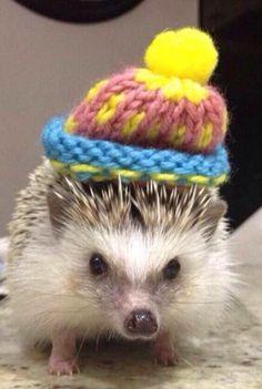 Super Cute Hedgehog in a Wooly Hat <3