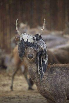 deer with dead bird on its head