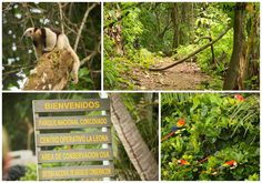 10 great hikes in Costa Rica - Corcovado National Park