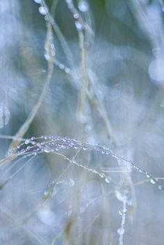 Fibres dotted with dew await a breath. | Sue O'Connor.  (Flickr)