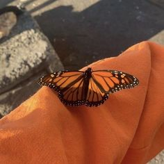 butterfly day  ft. Evan 52f4566473c403ab4f1c8dbd3fd44c85