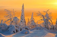 Frozen Planet photography: frozen taiga forest in Finland