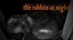 Die Kaninchen bei Nacht - the rabbits at night