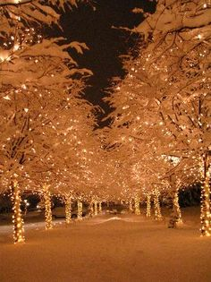 The Broadmoor: Christmas lights everywhere!