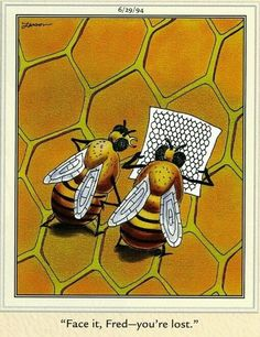The Far Side comic by Gary Larson - lost bees Buzzy Bee, I Love Bees, Bees And Wasps, Bee Art, The Far Side, Save The Bees, Bee Happy, Bees Knees, Mellow Yellow