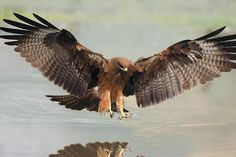 Kite just about to catch a fish by Nadeem khawar - Pixdaus