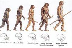 Resultado de imagen de fichas evolucion humana niños