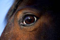 Image result for horse eyes