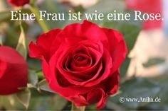 Eine Frau ist wie eine Rose.    www.Aniha.de
