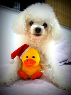 Jimmy and Mr Duck