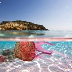 Life is a beautiful magnificent thing, even to a jellyfish (Charlie Chaplin) ph Pietro Tuccio Visit Sicily, Charlie Chaplin, Jellyfish, Terra, Ph, Collage, Italy, Outdoor Decor, Life