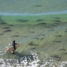 Orcas, Megalodon, Wind Surf, Leopard Shark, Shark Bait, Great White Shark, Ocean Creatures, Shark Week, Ocean Life