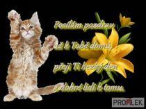 ahoj , obrázky, foto Cats, Gatos, Cat, Kitty, Kitty Cats