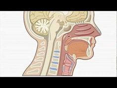 ▶ Vocal Nodules & How the voice works - Brighton Singing Lessons - YouTube
