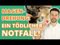Wie du eine Magendrehung beim Hund erkennst und richtig handelst! - YouTube Pets, Baseball Cards, Youtube, Twists, Dog Owners, Vet Office, Happy Life, Further Education, Authors