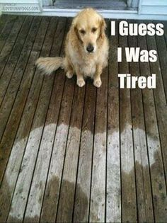 I was so tired! #dogs